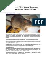 Enam Trik Agar Tikus Kapok Bersarang Dalam Rumah