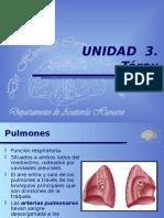 16-17TRXPulmones