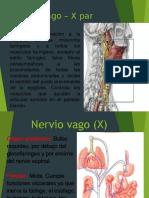 Nervio Glosofaríngeo IX