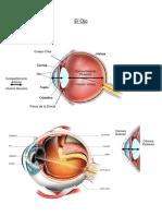 Resumen Ojo en Histo y Embrio