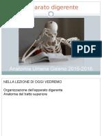 20-Digerente1-2015