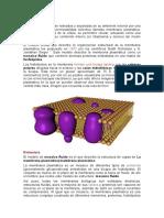 La Membrana Plasmática (1)