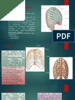 Diapositivas de Terapia