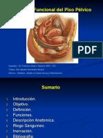 Anatomia Del Piso Pelvico