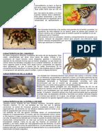 Características de La Mariposa Estrella de Mar y Otros