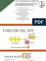 Funcion Del ATP