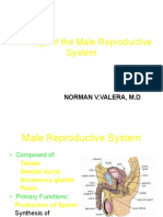 Histology of the Male Reproductive System