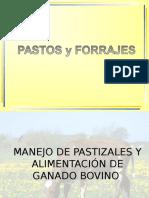 PASTOREO+Y+ALIMENTACIÓN+DE+GANADO+BOVINO+-+COSTA