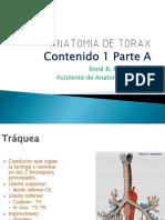 Anatomia de Torax.contenido 1 (a)