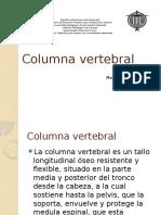 Columna Vertebrel Ok