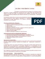 Rehabilitacion_fisioterapia_canina.pdf