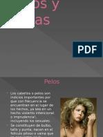 Pelos y Fibras Diapositivas