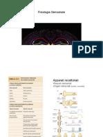 Neuro-Fisiologia Sensoriale