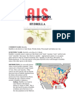 hydrylla verticillata