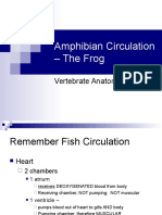 Amphibian Circulation - The Frog