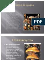 Presentac.. diversidad y reproduccion de hongos