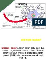 Fisiologi Ssp Dan Sst