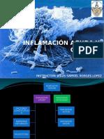 inflamacinagudaycrnica22-120926002128-phpapp02