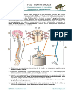 FI e FT Sistema Nervoso