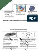 Funciones de Las Partes de La Célula