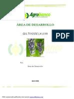 AREA DE PRODUCCION CULTIVO DE LA VID.pdf