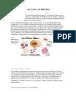 celula macre