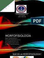 morfofisiologadiapositiva