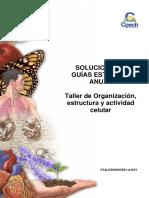 2016 Solucionario Guía 10 Taller de Organización Estructura y Actividad Celular