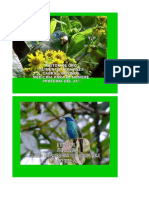 Alimentacion de Aves - Boton de Oro Planta Milagrosa