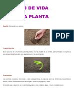 CICLO DE VIDA DE LA PLANTA2.docx