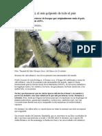 May. 10 - 14 Colombia - Pierde El 92 Por Ciento de Bosques