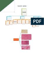 aplicatie tesuturi.pdf