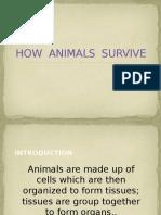 How Animals Survive