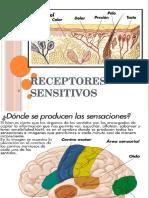 Receptores sensitivos