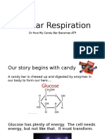 cell respiration - new