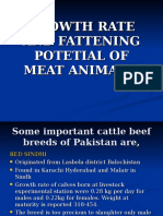 Growth Rate and Fattening Potetial of Meat Animals