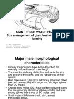 giantfreshwaterprawnsizemanagement-111205183305-phpapp02