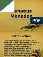 penaeusmonodon-131015081311-phpapp01