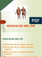 16MUSCULOS DEL PIE.pptx