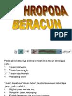 ARTROPODA  BERACUN