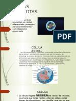 CELULAS-EUCARIOTAS