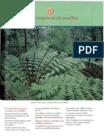 capitulo 21 Nabors Botánica PLANTAS VASCULARES SIN SEMILLA.pdf