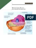 BC 07 - Estructuras Citoplasmáticas