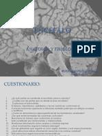 Encefalo 5A1