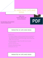 parasites in cats and dogs outline
