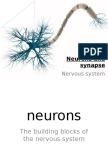Neurons and Synapse