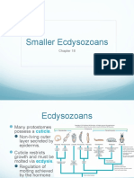 18. Smaller Ecdysozoans