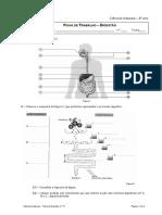 ficha-trabalho-11digestaopdf-110523035802-phpapp02.pdf