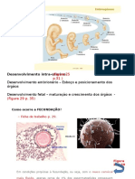 desenvolvimentoembrionario-131024182014-phpapp01