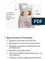 Lecture 12 Kidney